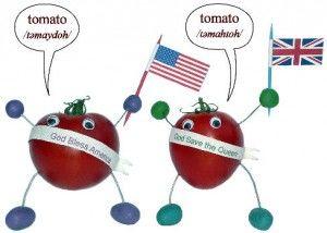 tomato accent