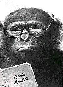 origin of language blog gorilla