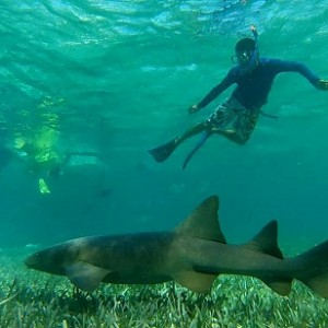 Shark and Diver meet